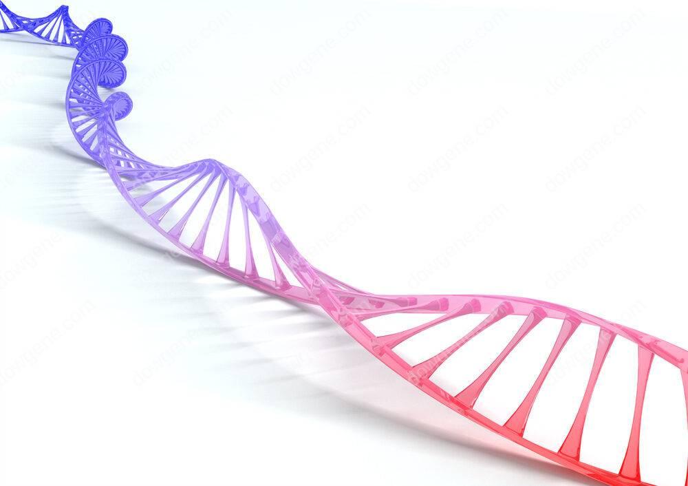 국내우수 유전자 검사 기관에 친자검사 서비스제공